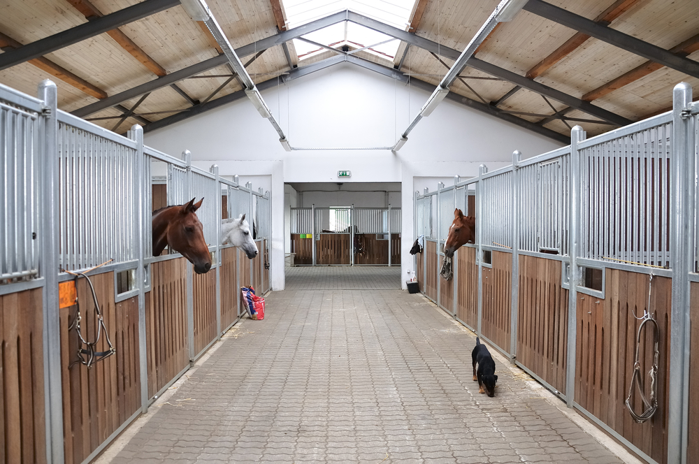 stables horses_86490931